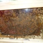 Enlèvement gratuit d'essaim d'abeilles